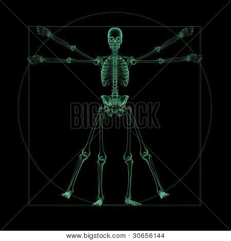 X-ray skeletal structure of a vitruvian man