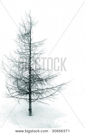 Isolated snow tree at a white background