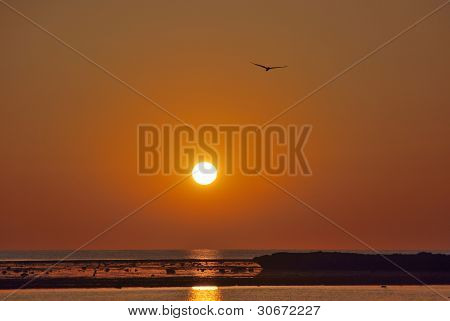 bird flies into the sunset