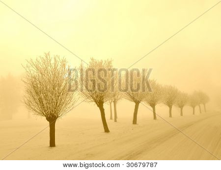 A snowy road with frosted pollard willows