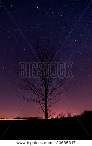 Starry Tree Silhouette