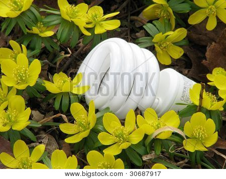 Compact fluorescent light bulb (CFL) in bed of blooming yellow winter aconite plants. Natural light.