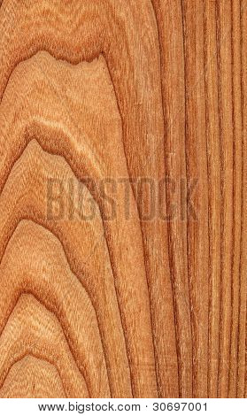 Elm (wood texture)