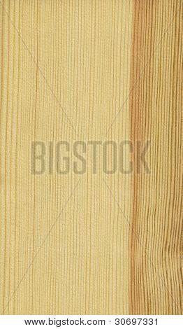 Pine (wood texture)