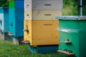 Different Hives In The Apiary. Single And Multiple Hives. Green Single Body Hive And Returning Bees. poster