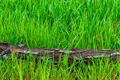 Horizontal Shot Of A Fallen Tree Trunk Laying Horizontally Across Wet Green Springtime Grass With Co poster