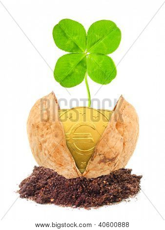Golden coins and a four leaf clover in the nutshell. The luck concept.