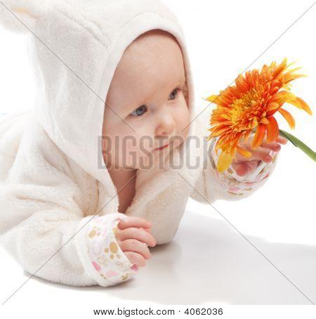 Baby Examining Daisy