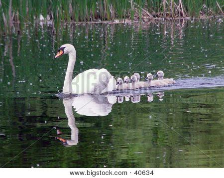 Easthampton Swans