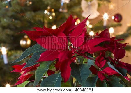 Winter Rose Decoration