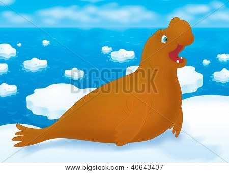 Sea elephant