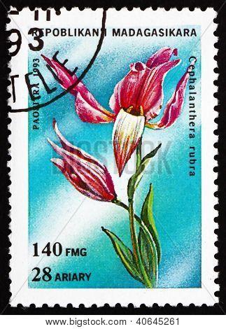 Postage stamp Malagasy 1993 Red Helleborine, Cephalanthera Rubra