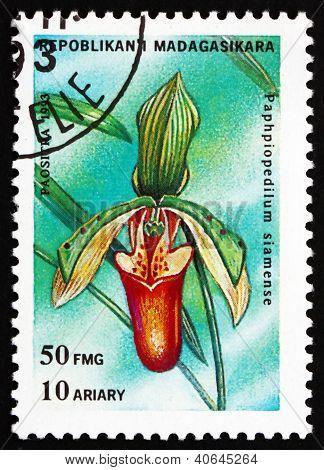 Postage stamp Malagasy 1993 Lady's Slipper, Paphiopedilum Siam