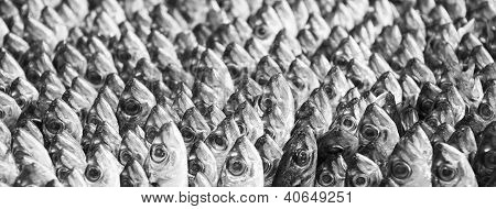 Standing Mackerel