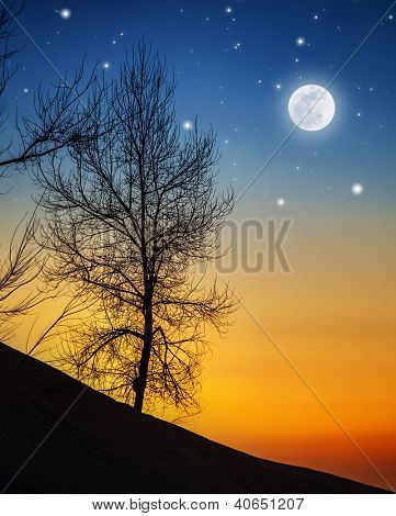 Picture of big dry tree in moonlight, silhouette of wood on hill on dark night background, bright moon with shining stars in sky, wintertime nature, dramatic sunset, starry dusk, beautiful landscape