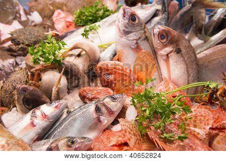 Fish Market Spain