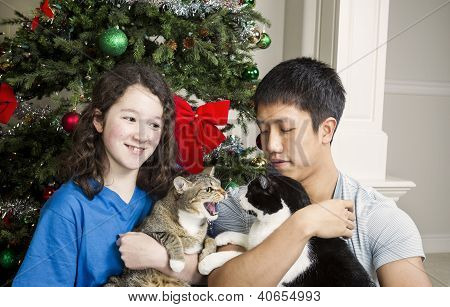 Gato gruñón durante vacaciones