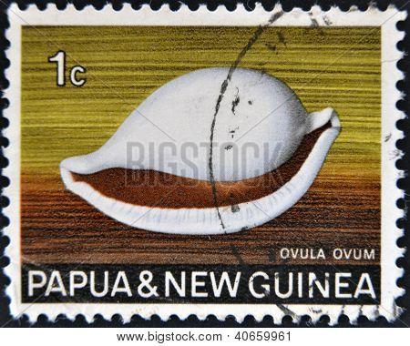 PAPUA NEW GUINEA - CIRCA 1969: A stamp printed in Papua New Guinea shows shell ovula ovum circa 1969