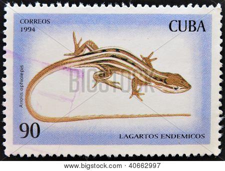 CUBA - CIRCA 1994: A stamp printed in Cuba shows a lizard endemic circa 1994