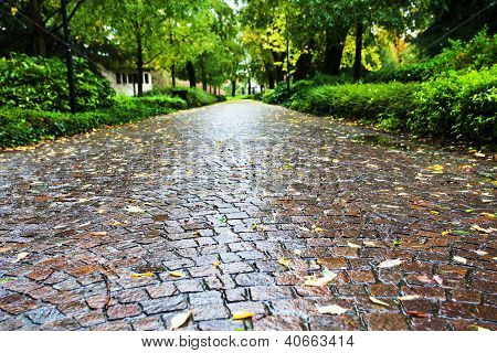 Wet Cobble Stone Path In Parco Dell Arena, Padua