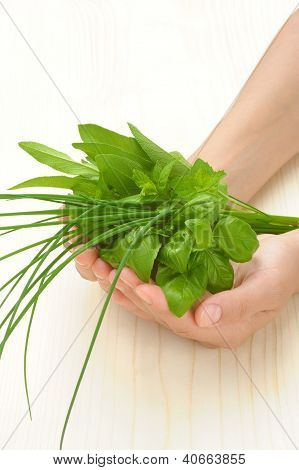 Hands of young woman holding fresh herbs basil chive sage