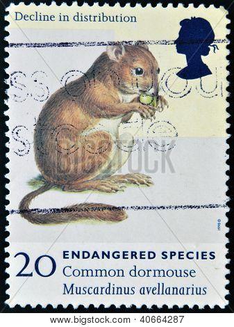 Reino Unido - CIRCA 1998: Un sello impreso en Gran Bretaña muestra común Lirón Muscardinus avel