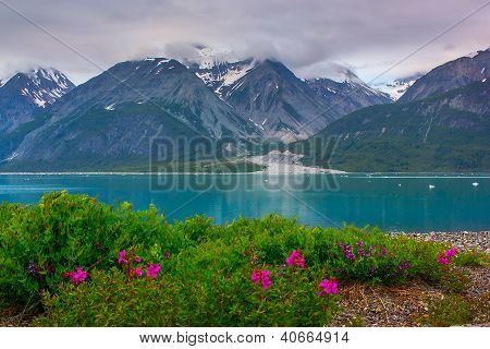 Whild Flowers In Glacier Bay National Park, Alaska