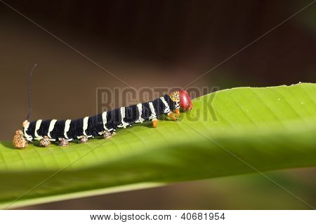 Colorful Caterpillar