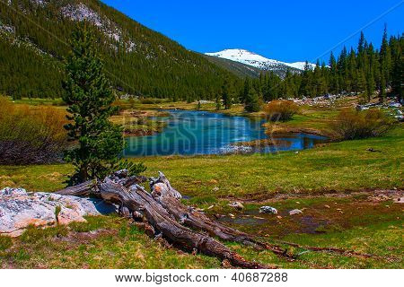 Lyell Fork Of Tuolumne River Along Pacific Crest Trail, Yosemite National Park.