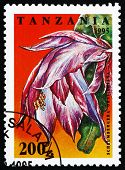 picture of schlumbergera  - a stamp printed in the Tanzania shows Schlumbergera Orssighiana - JPG