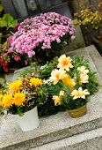picture of urn funeral  - Funeral flowers placed on the grave at All souls holiday - JPG