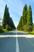 Bolgheri Famous Cypresses Tree Boulevard Landscape. Tuscany Landmark, Italy poster