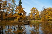 stock photo of tsarskoe  - Catherine - JPG