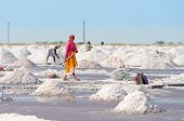 Salt Collecting In Salt Farm, India