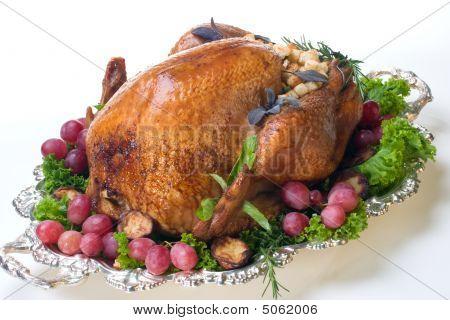 Holiday Turkey On White
