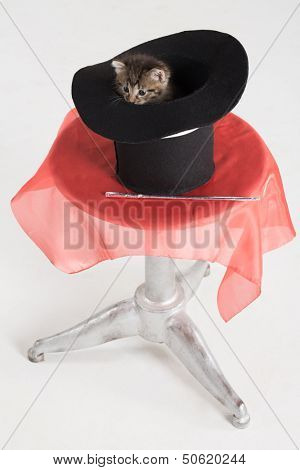 Kitten peeking out of the cylinder reclining on a round table
