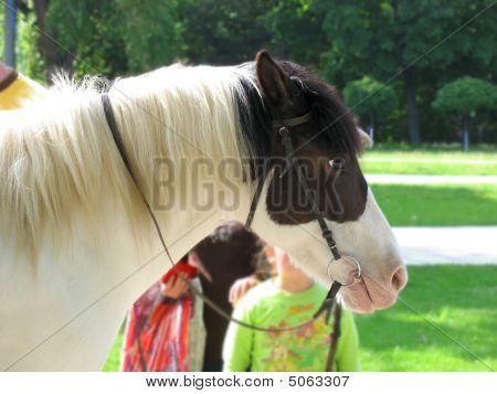 Perfil de cabeza de caballo con niños sobre fondo