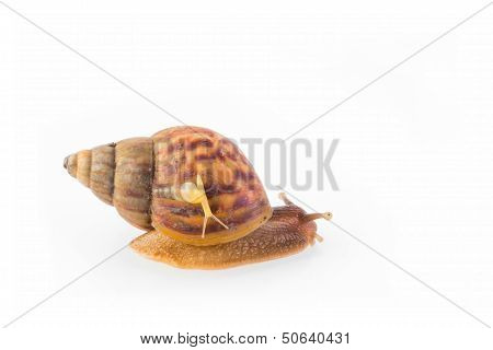 Big And Small Snail