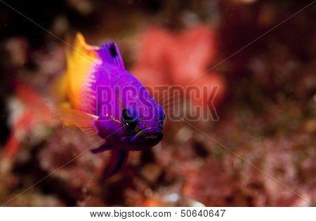 Small fish up close