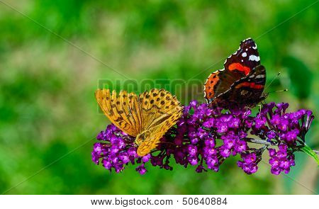 Butterflies Ignore Each Other