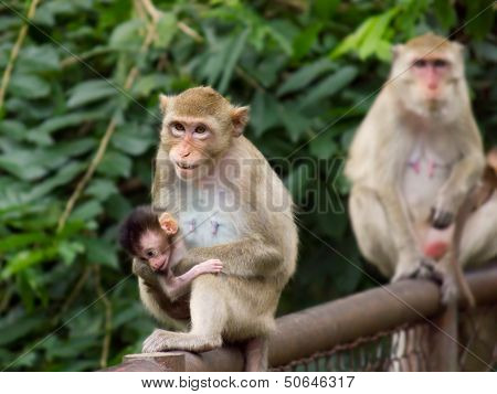 Monkey Mom And Little Baby