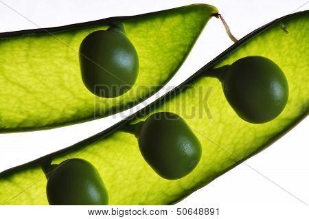 peas in the pod