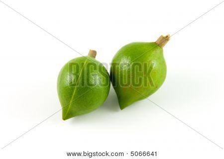 Two Macadamias