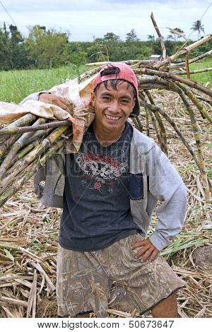 Cane Field Worker