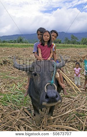 Children Riding A Water Buffalo