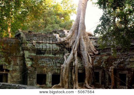 Templo cargado de árbol