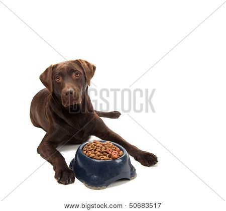 Brown Labrador Laying Next To Dog Food