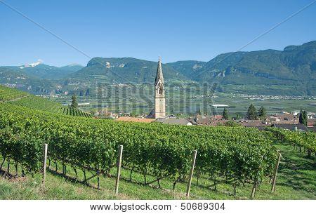 Tramin,South Tyrol,Trentino,Italy