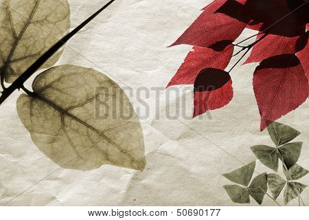 Dry Leaves On Old Toned Paper Background. Herbarium Illustration