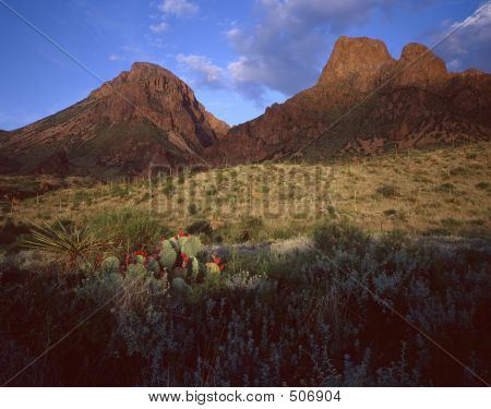 Chisos Mountains & Cactus